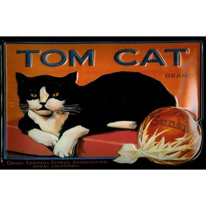 Tom Cat - Katze