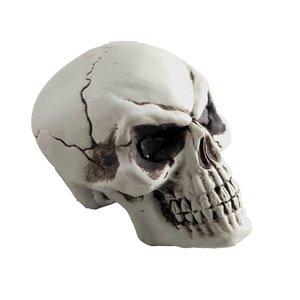 Schädel