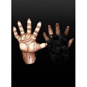 Braune Affenhände - Schimpanse