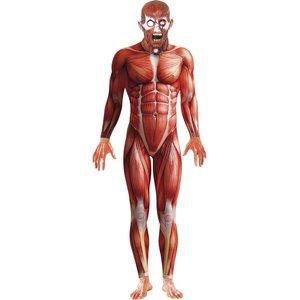 Anatomie Mann