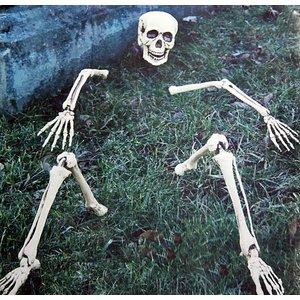 Skelett Teile