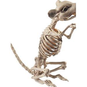 Rattenskelett