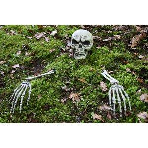 Skelett aus der Erde