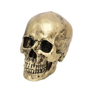 Teschio - Cranio