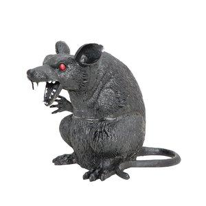 Rat - Souris