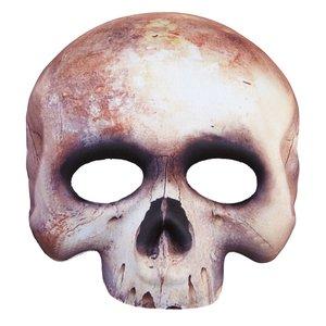 Crâne - Squelette sans menton