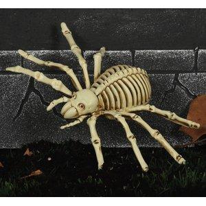 Scheletro di ragno